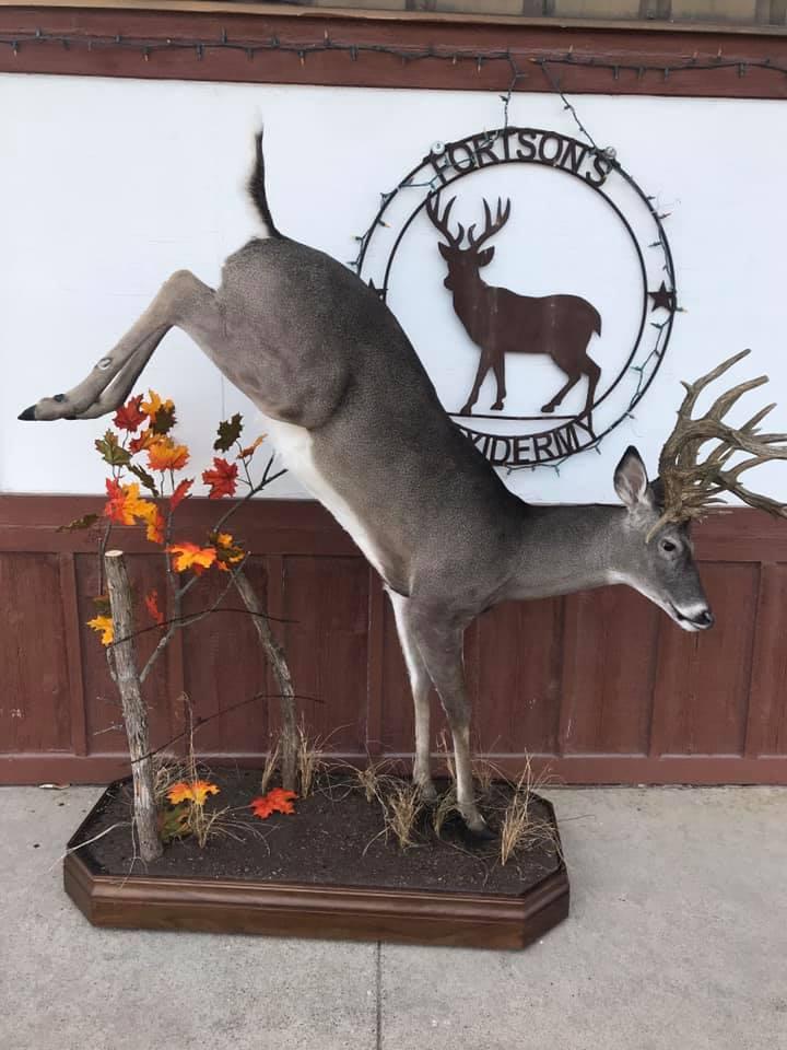 Fortson's Deer Processing & Taxidermy - Robinson TX - 10