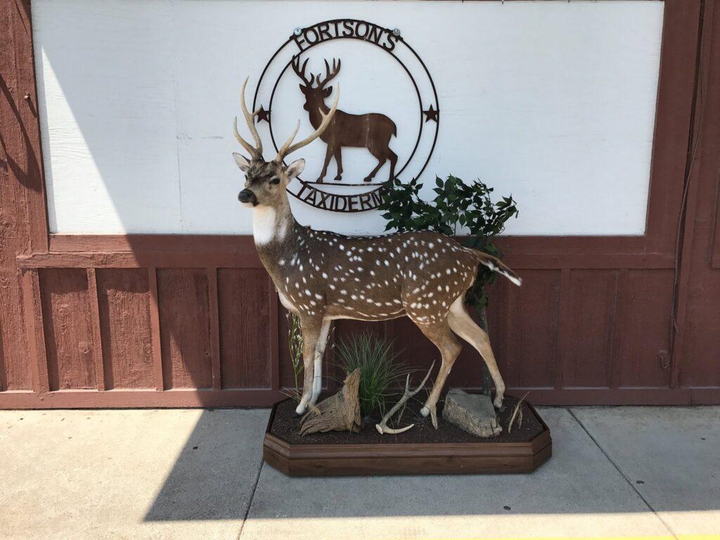 Fortson's Deer Processing & Taxidermy - Robinson TX - 16