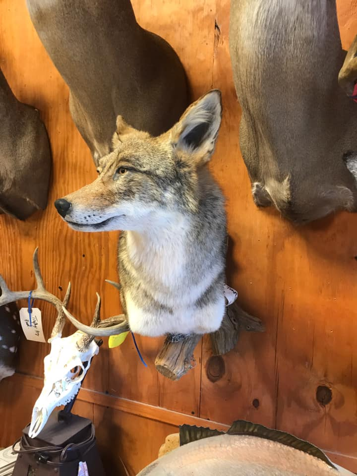 Fortson's Deer Processing & Taxidermy - Robinson TX - 7
